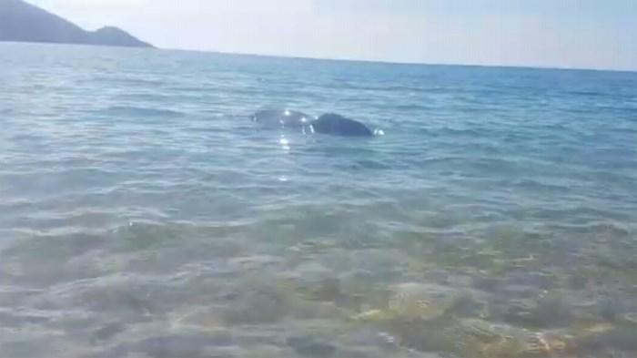 """Alkenaar waakt dag en nacht bij stervende walvis: """"Een dier is evenveel waard als een mens"""""""