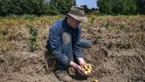 Totale droogteschade wordt op 457 miljoen euro geraamd, meeste schade in Peer
