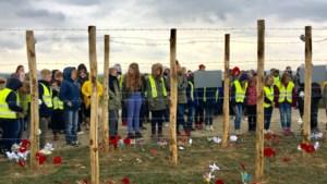 Schoolkinderen planten krokussen en klaprozen bij 'dodendraad' in Kanne