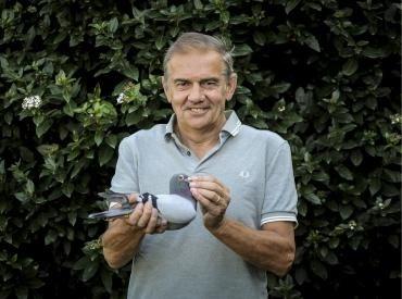 Wereldwijde interesse voor veiling 815 duiven van Vlaamse liefhebber: al 514.000 euro op de teller