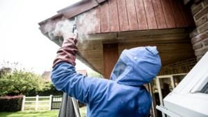 Wespen en muggen blijven voor overlast zorgen door zomerse november