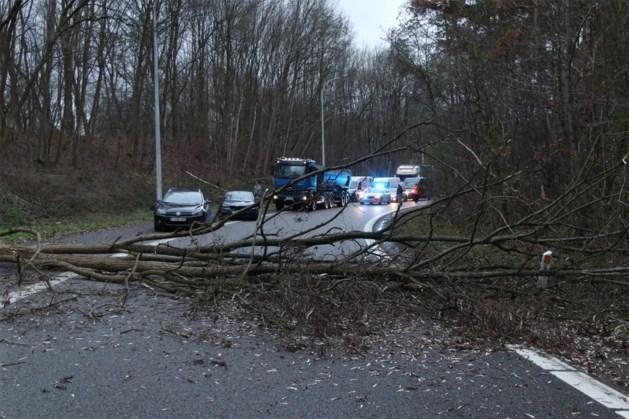 Verkeershinder door omgewaaide boom op oprit E314 Genk-Oost