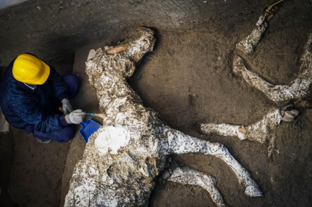 Spectaculaire vondst in Pompeï: botten van raspaard in bijzondere militaire uitrusting gevonden