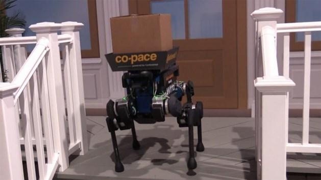 VIDEO. Levert robothond binnenkort pakjes aan huis?