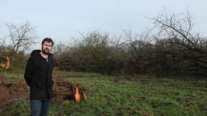 Kasteelheer kapt hoogstamboomgaard in Hoeselt: proces-verbaal voor rooien van plantage zonder vergunning