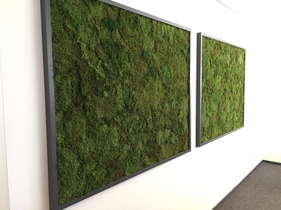 Verrassend Mos aan de muur: stukje natuur als groene blikvanger in huis - Het NL-39