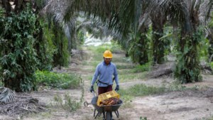 EU opent achterpoortje voor palmolie in diesel