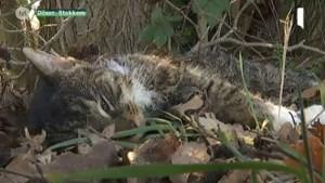 Dode kat en vos gevonden in Rotem: is er een gifstrooier aan het werk?