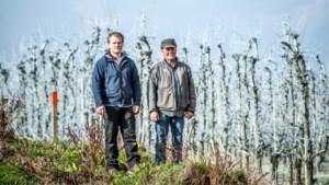 """Limburgse fruittelers bouwen privéwindmolens: """"Om maandelijkse kosten van 5.000 euro te drukken"""""""