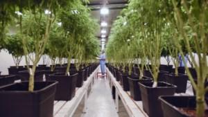 Licht op groen voor teelt van medicinale cannabis