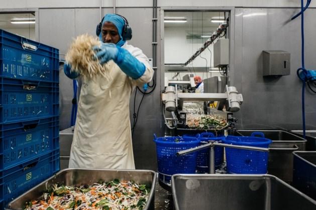 Groentebedrijf Greenyard wil 422 banen schrappen, fabriek in Bree te koop