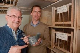 Krankzinnige veiling van duurste Vlaamse duif ooit brengt meer dan 1 miljoen euro op