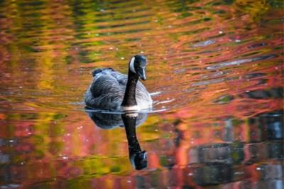 Gepensioneerde dierenarts steelt peperdure vogels van Bocholtse kwekerij