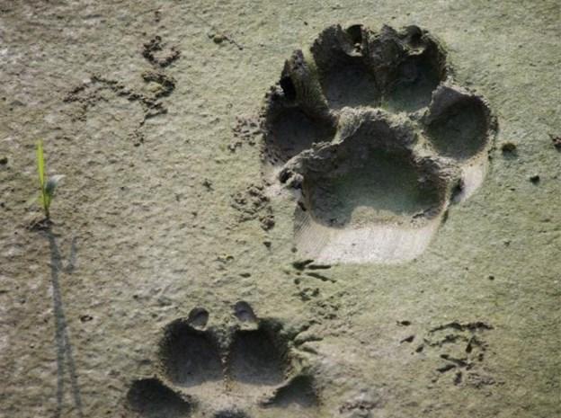 """Genkenaar huilend voor rechter voor dierenmishandeling: """"Mijn honden waren mijn leven"""""""