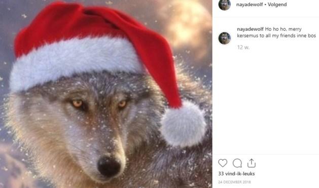 """Wolvin Naya deelt avonturen via Instagram: """"Kzeg zo van 'jo alpaca's wa make?'"""""""