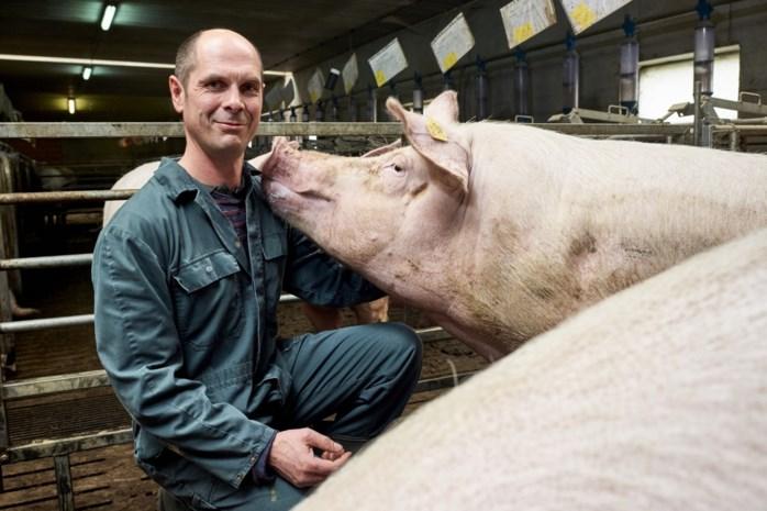 """Boer uit Wijer onderzoekt effect van muziek op varkens: """"Ik begon te zingen terwijl ze aan het dekken waren"""""""