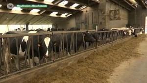 Nog strengere bemestingsnormen voor Noord-Limburgse boeren