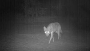 Dit was onze aprilgrap: vrijwillige wildwachters gezocht