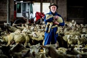 """Misnoegde herders komen op straat met hun schapen: """"We worden gepest"""""""