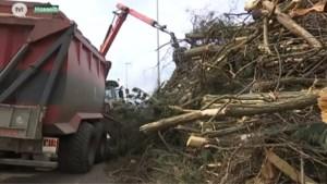 Wegen en verkeer kapt 300 bomen voor Spartacustram in Hasselt