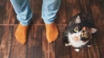 Katten herkennen hun naam, ze luisteren gewoon niet