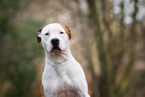 416 euro boete geëist voor man die hond dumpt in bos