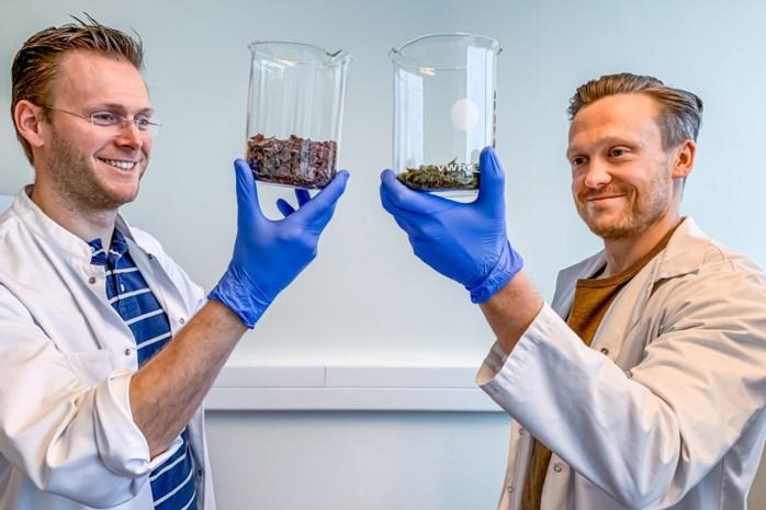 """Nieuwe studie UHasselt: """"Zeewier kan mogelijk ontwikkeling alzheimer afremmen"""""""