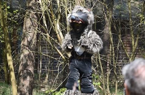 Massale belangstelling voor wolvenspel in Bosland