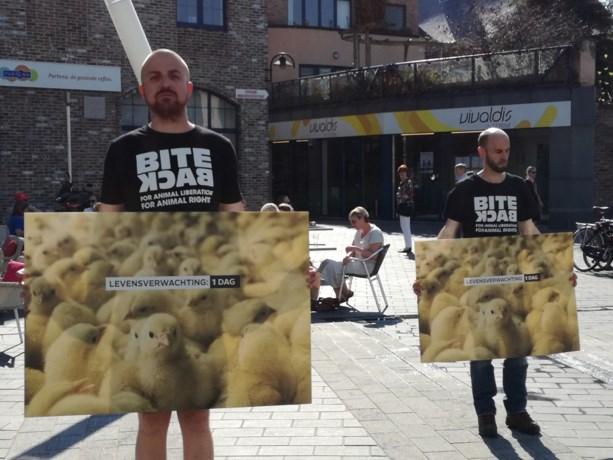 Actie tegen doden van pasgeboren kuikentjes in Hasselt