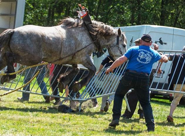 Paard slaat op hol tijdens trekwedstrijd in Beringen