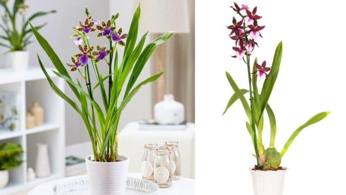 Zo kies je de orchidee die het best bij jou past