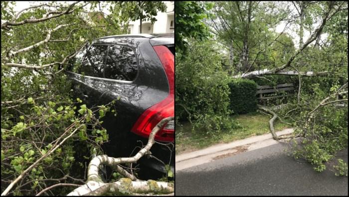 Boom valt op auto in Hasselt