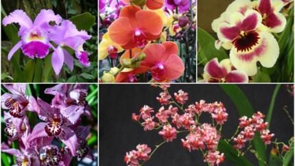 Orchideeën moeilijk? Helemaal niet, als je weet hoe je deze diva moet aanpakken