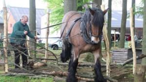 Toekomst van trekpaarden ligt in ecologisch natuurbeheer