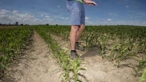 """""""Veel grote bedrijven hebben geen plan-B voor droogte"""""""