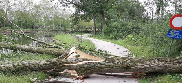 Omgevallen bomen versperren jaagpad