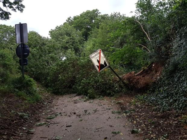 Rukwinden zorgen voor tal van omgewaaide bomen in Limburg