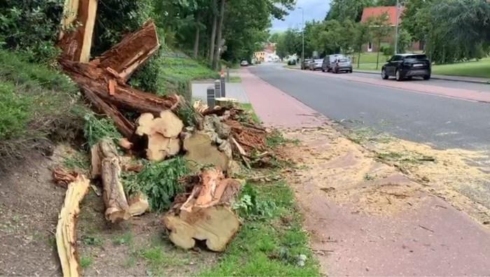 Genkse Nieuwstraat tijdlang versperd door omgewaaide boom