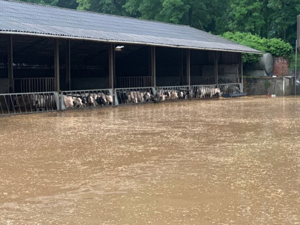 Truiense boerderij waar Rundskop werd gefilmd volledig onder water