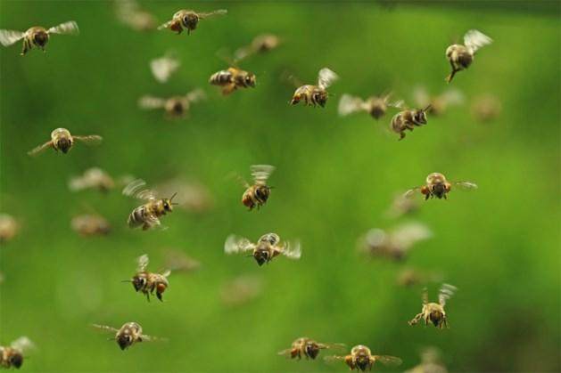 133 miljoen bijen zwermen uit nadat vrachtwagen over de kop gaat in VS