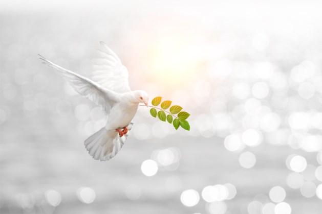 Wereldwijde vrede gaat er licht op vooruit, België op plaats 18 in Global Peace Index
