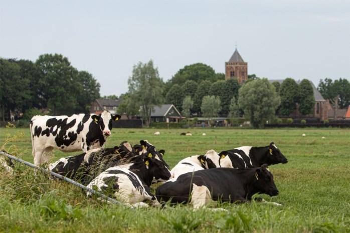 Vandalen laten negen koeien ontsnappen in Geetbets