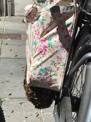 Imker blijft onbewogen als hij duizenden bijen vangt die zich nestelden in Kortrijkse fietsen