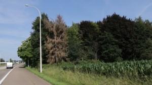 Vier hectare bos moet gekapt voor nieuwe woonwijk