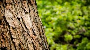 UAntwerpen zoekt kinderen om boomschors te testen als middel tegen ADHD