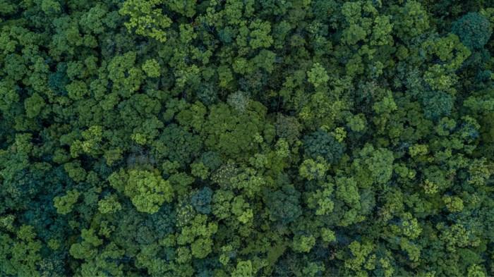 Het wondermiddel om het klimaat te redden: 1, 2 biljoen bomen planten