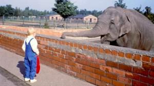 Vergeten toerisme: de Zoo van Zwartberg met knuffelende leeuwen en likkende apen