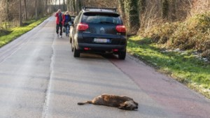 """Jagers waarschuwen voor overstekende reeën: """"Wees extra voorzichtig"""""""