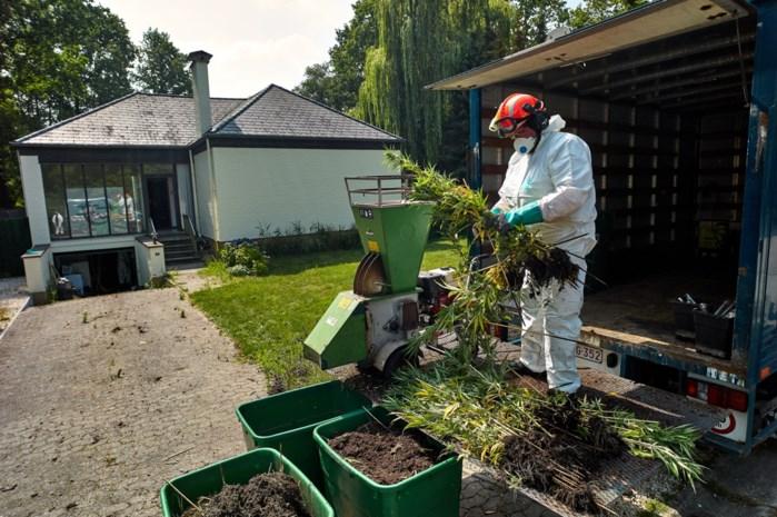 Twee mannen in cel na opdoeken wietplantage in Stevoort