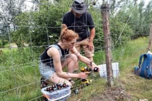 Eerste vrijwilligers Wolf Fencing Team leren hekken plaatsen tegen wolven